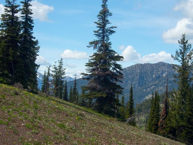 At .5 miles pass through an open meadow