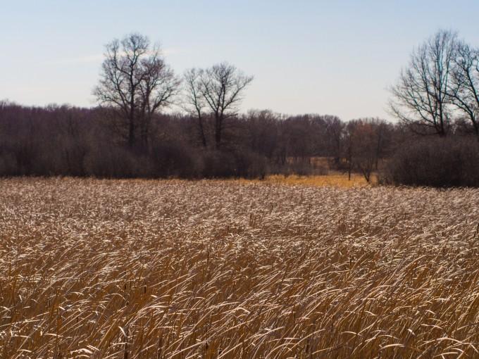 Sandy Grasslands